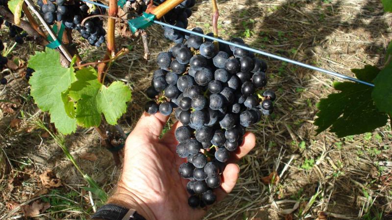 Coastal Wine Trail – Public Relations