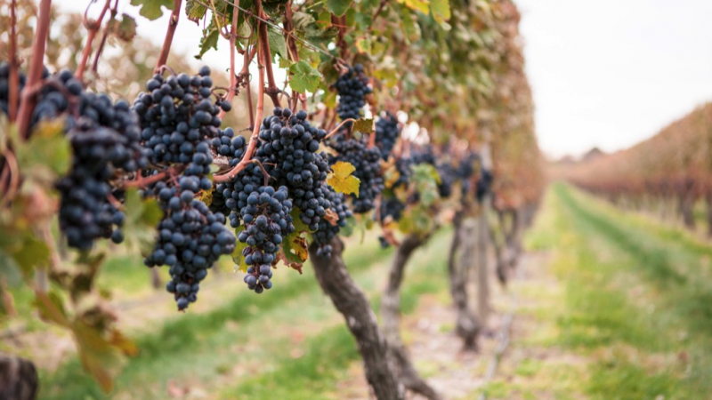 success-story-newport-vineyards